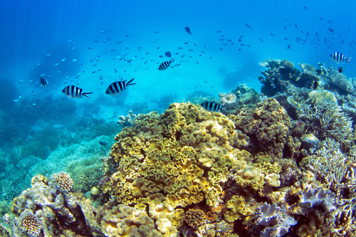coral reef in the whitsundays