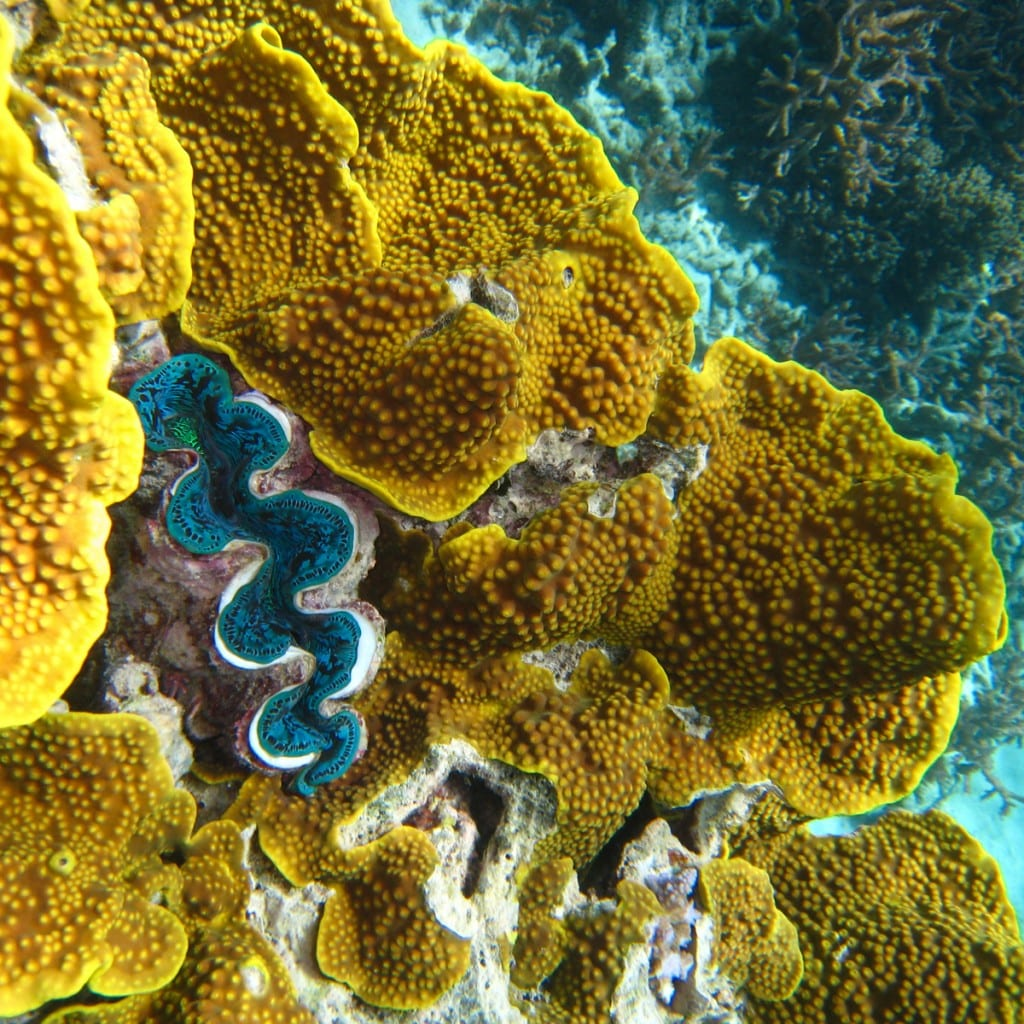 corals and clams