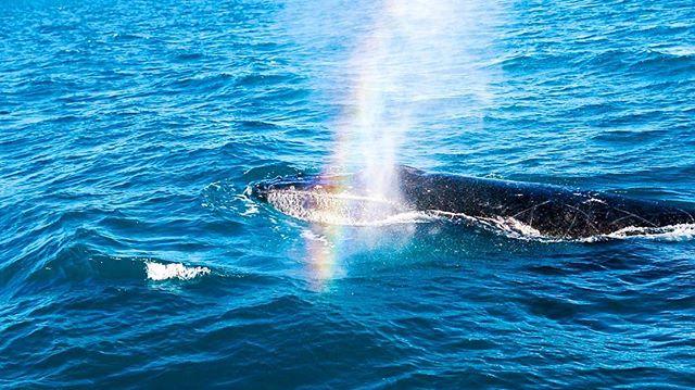 Rainbows & Whales