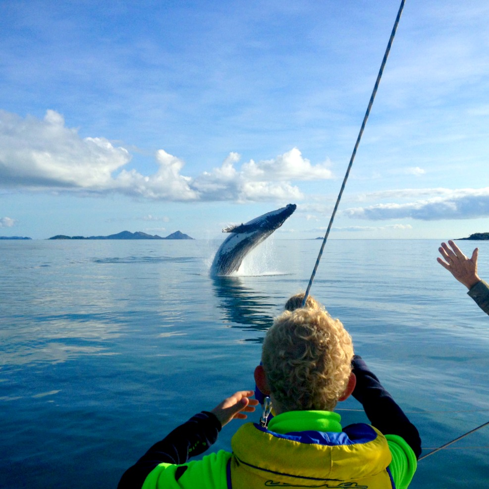 Whales in the Whitsundayys - image by @allastallaadventures