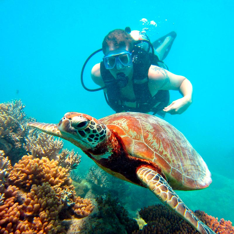 Diver with a turtle on the fringing reefs of the Whitsunday Islands