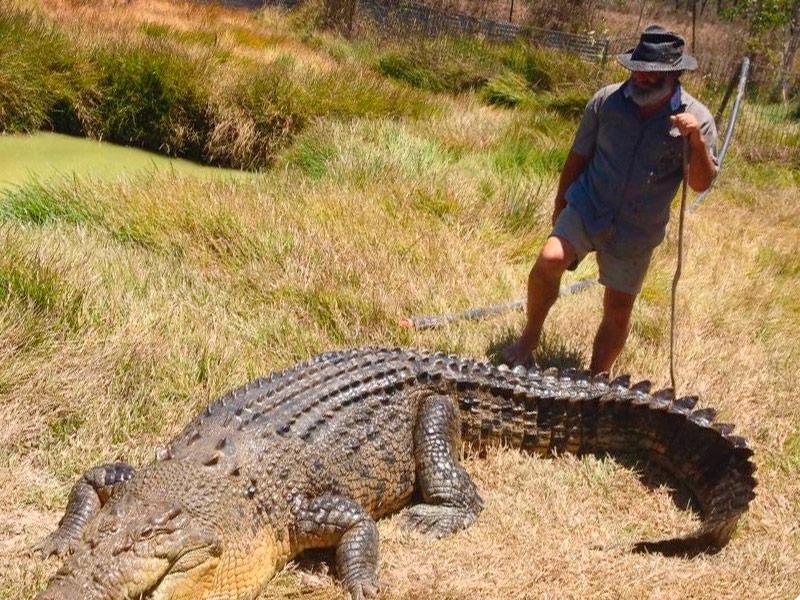 Bredls Wildlife Park - man with a saltwater crocodile